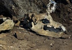 2009_08_1100_jaskinia-niedzwiedzia