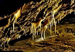 2009_08_1168_jaskinia-niedzwiedzia